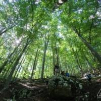 Pădurea de fag, spre cheile Tâmnei