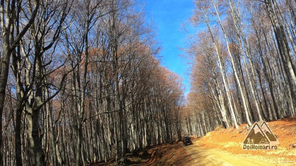 Trasversăm pădurea