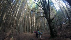 Pădure nebună