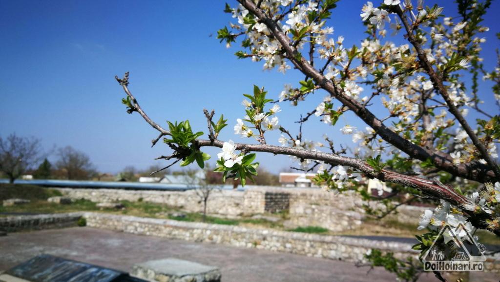 Primăvara la Sucidava