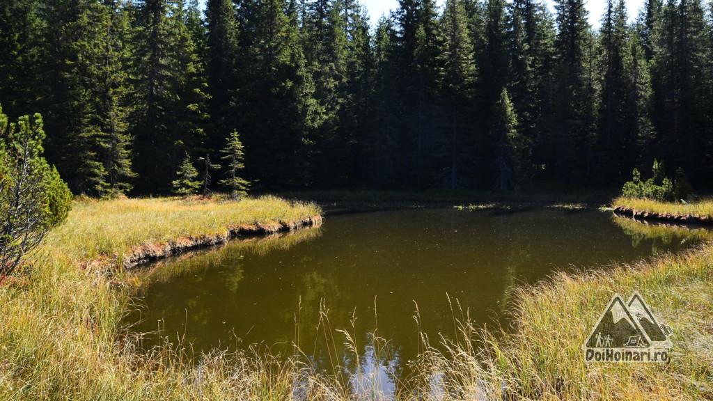 Lacul Violeta