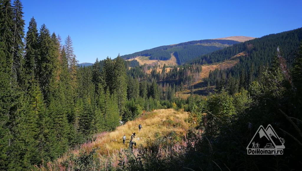 Păduri tăiate la coada lacului Galbenu