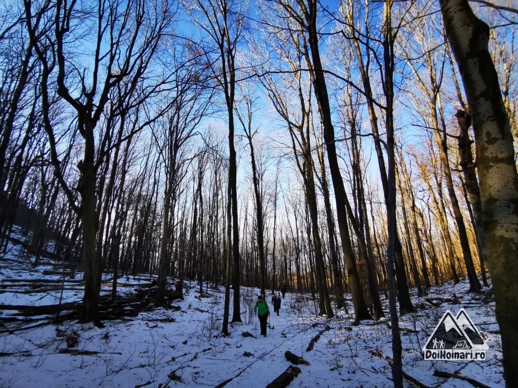 Vârful Trescovăț - pădurea de la baza vârfului